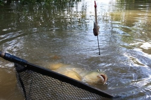 Fox 5 x Compact 28g Carp Method Feeders  Carp fishing tackle